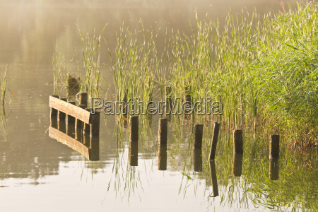 stakes and reed at sunrise at