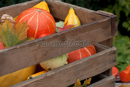 colorful pumpkin mix