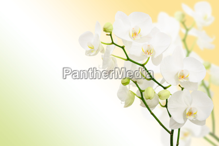 morning spring background with branches of