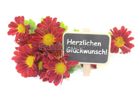 red chrysanthemums with blackboard