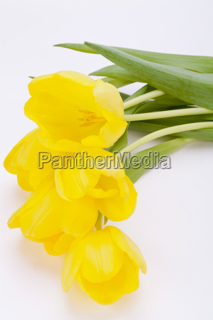 bouquet of yellow tulips to easter