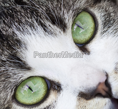 close up on a cat