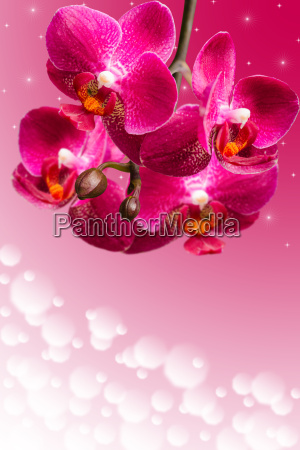 dark purple orchid flowers on blurred