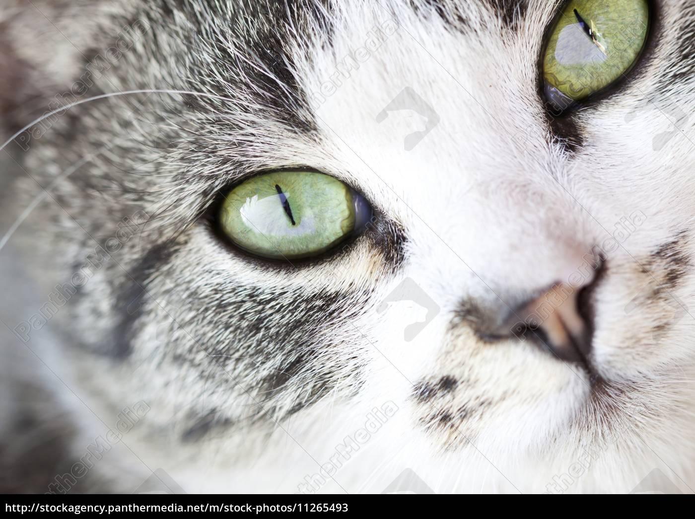 cat's, portrait - 11265493
