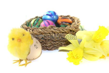 easter basket with chicks and daffodils