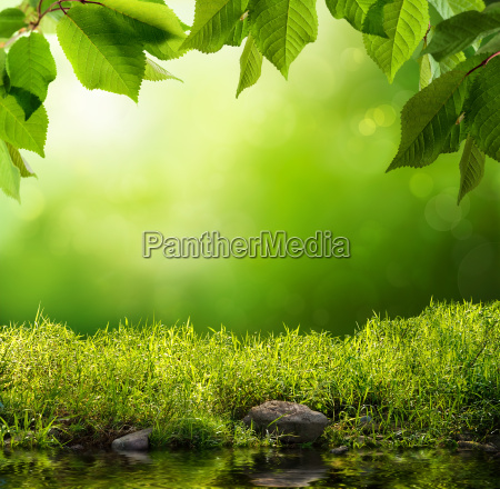green nature as a background