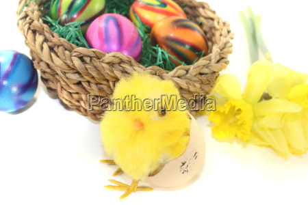 easter nest with chicks and colored