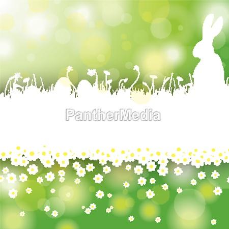 easter card background white grass rabbit