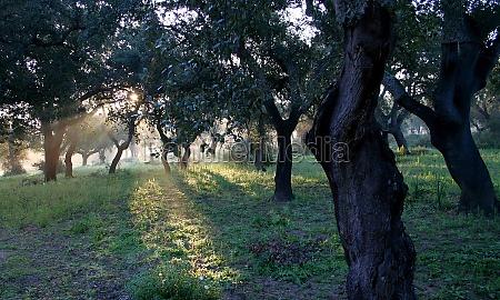 in the oak grove