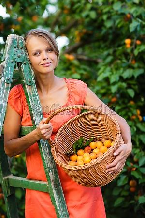 pretty young woman picking apricots lit