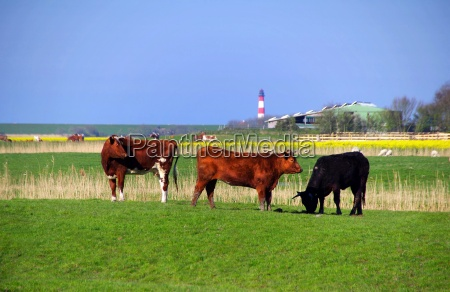 westerhever lighthouse in north friesland