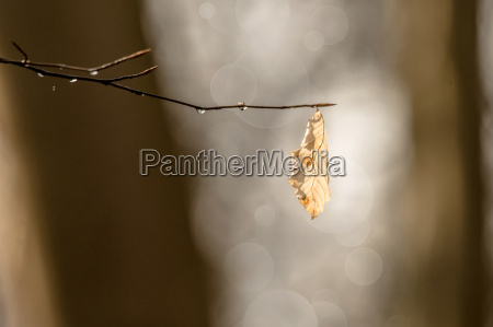 autumn leaf hanging from a branch