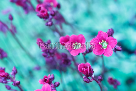 beautiful spring flowers in abstract color