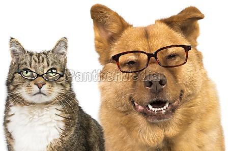dla psow i kotow w okularach