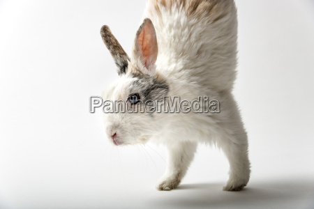 rabbit on white