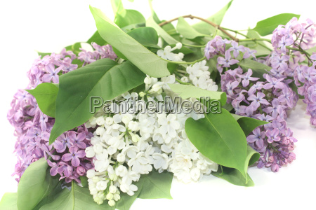 a bouquet of colorful lilac