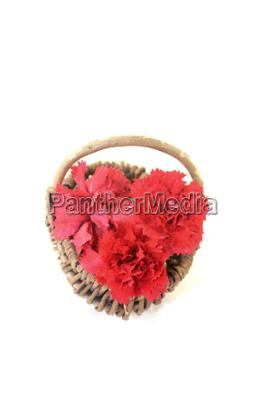 red carnations in a basket