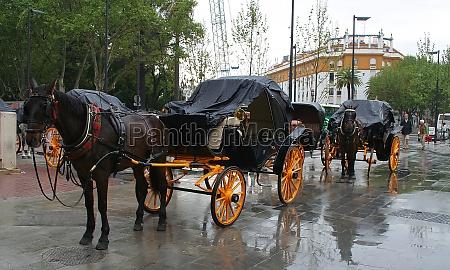 arrival, in, seville - 11531205