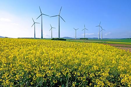 windmills and flowering rape field