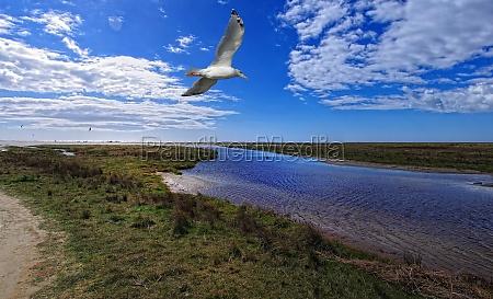 seagull on the north sea beach
