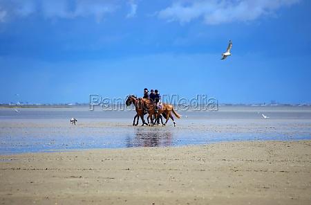 rider on the north sea beach