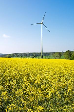 wind turbine behind a field of