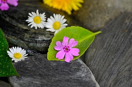 wellness stones balance sheet
