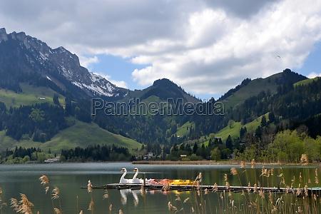 pedalos at the lake