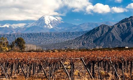 volcano aconcagua and vineyard aconcagua is