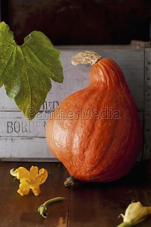 arrangement autumn autumnal box boxes container