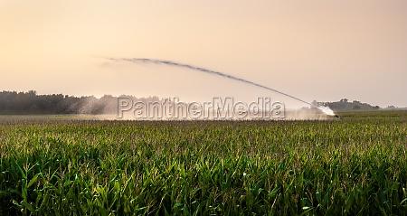 irrigation on corn field