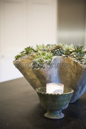 contemporary plant arrangement on countertop