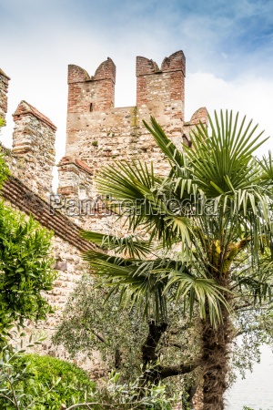 city wall and palm tree