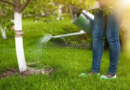 woman pouring water of watering can