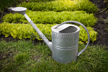 galvanized watering can on garden bed