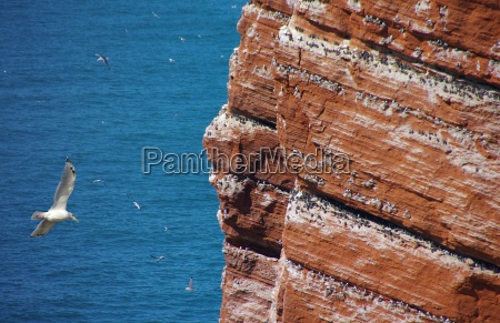 helgoland rock with seagull
