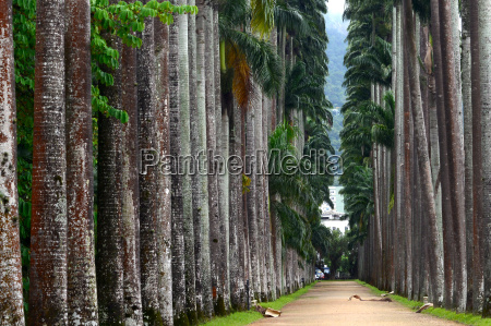the palm alley in the botanical