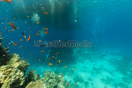 divers and the aquatic life in