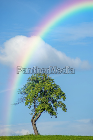 tree with rainbow