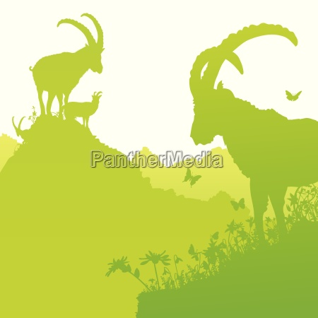 ibex on mountainside