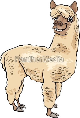 alpaca, animal, cartoon, illustration - 11746275