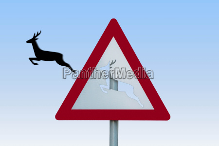 deer jumps out of the sign