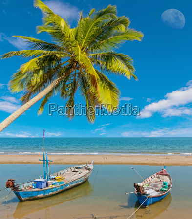 two boat and coconut tree