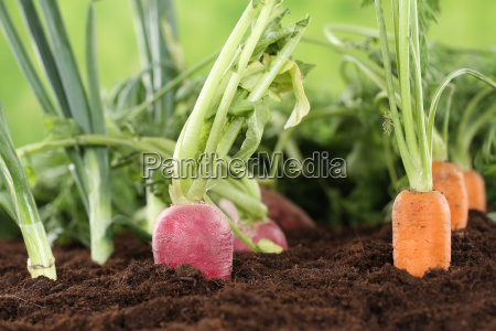 healthy nutrition fresh vegetables in the