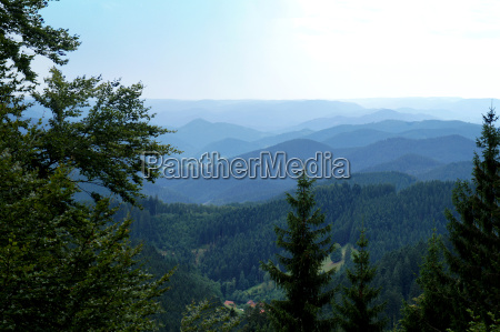 endless expanses of the black forest