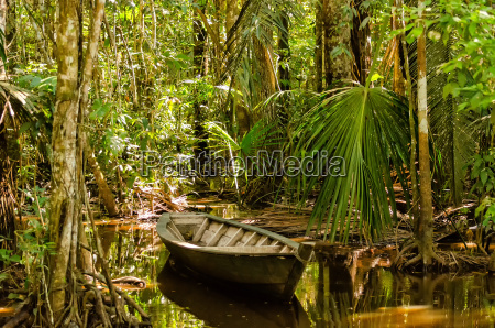 rowing boat in the jungle