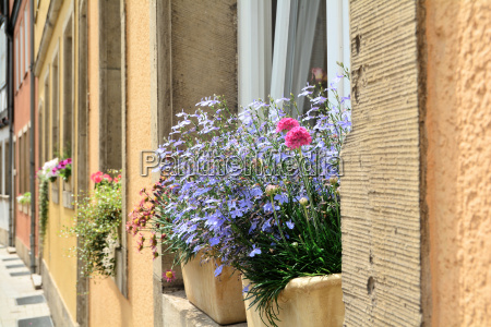 flowers at a house window