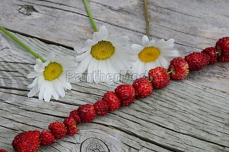 fresh wild strawberries and daisies