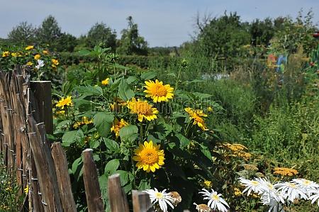 state garden show zuelpich 2014