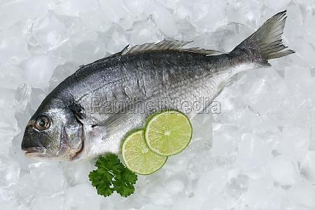 dorade fish on ice